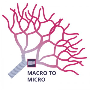 A CRITICAL KISS: FROM MACRO TO MICRO