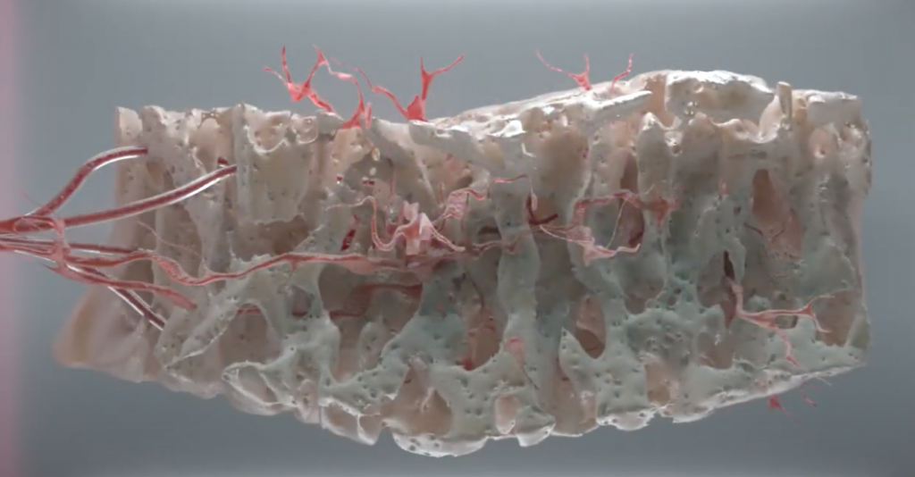 Ossicle in the bone chamber made by tissue engineering approaches